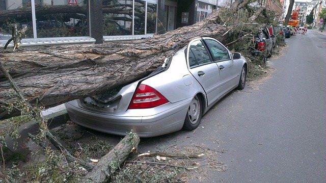 padlý strom na auto