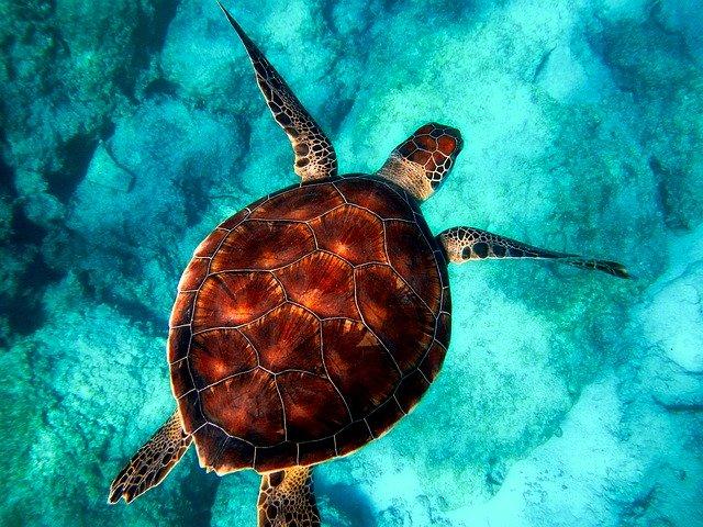 želva v oceánu.jpg